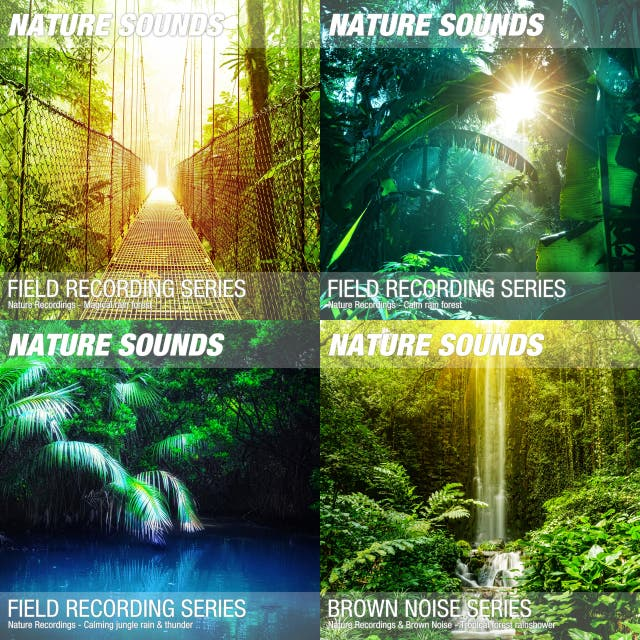 9 hours Rainforest Nature Sounds for Sleep, Relaxation & Meditation