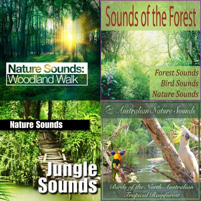 Australian Nature Sounds – Birds of the North Australian