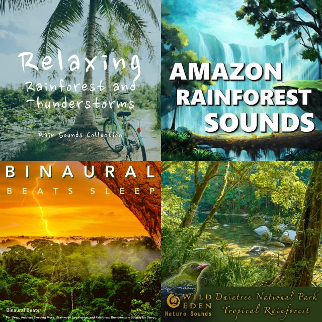 Rainforest Ambient on Spotify