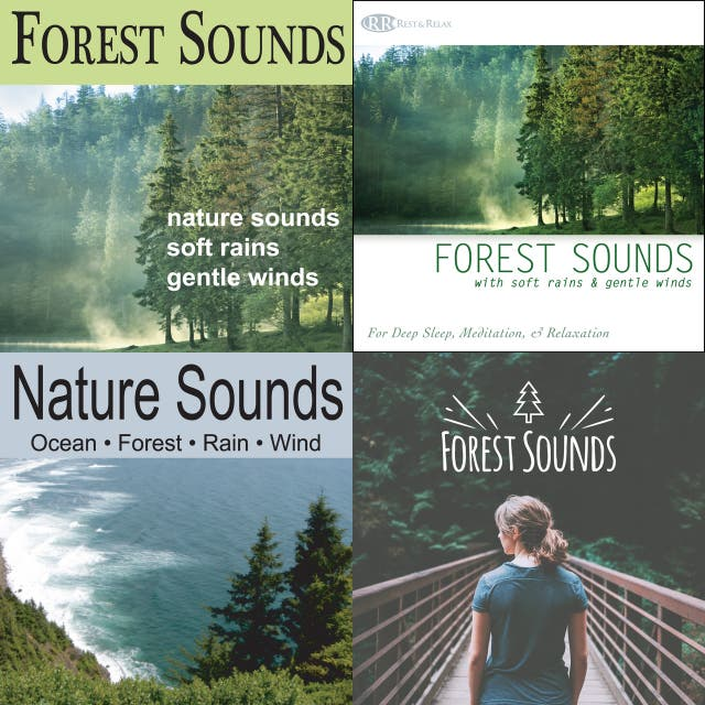 Forest sounds for sleep on Spotify