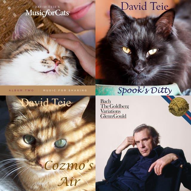 Kitty Playlist